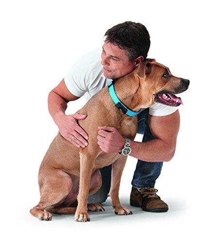 kleinster GPS Tracker für Tiere Hund, Katze, Pferd, etc. / ultimativer Schutz für Ihr Haustier / inkl. App für Ihr Smartphone – Petpointer